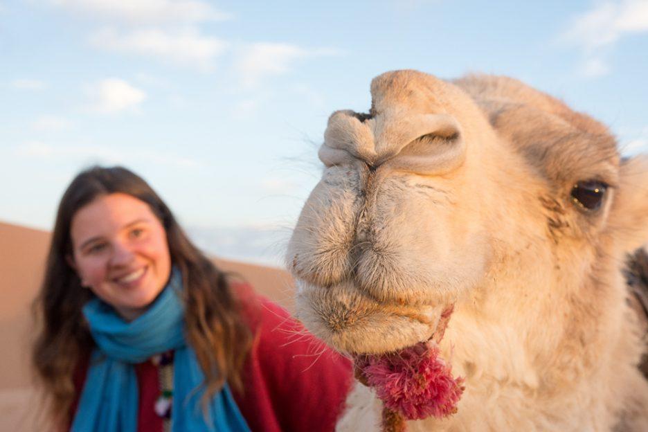Maroko velbloudi poušť