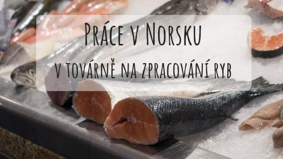 Práce v Norsku v rybím průmyslu: Život na ostrově Frøya