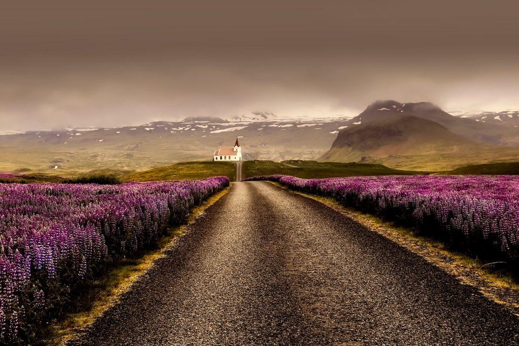 Počasí na Islandu: Vlčí boby