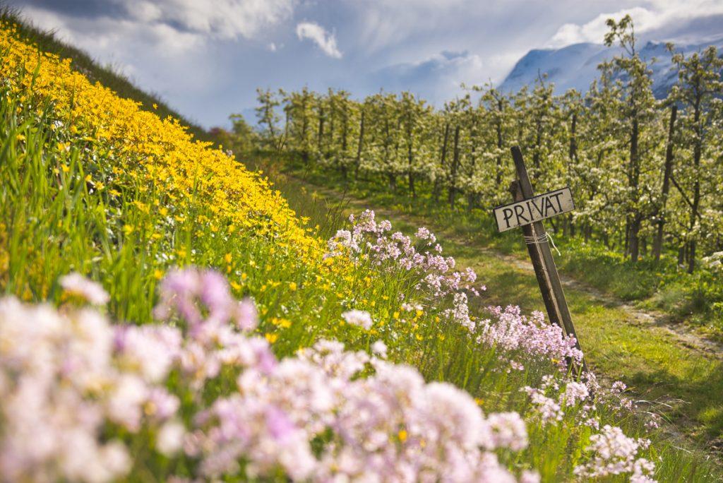Spring in Norway, Hardanger
