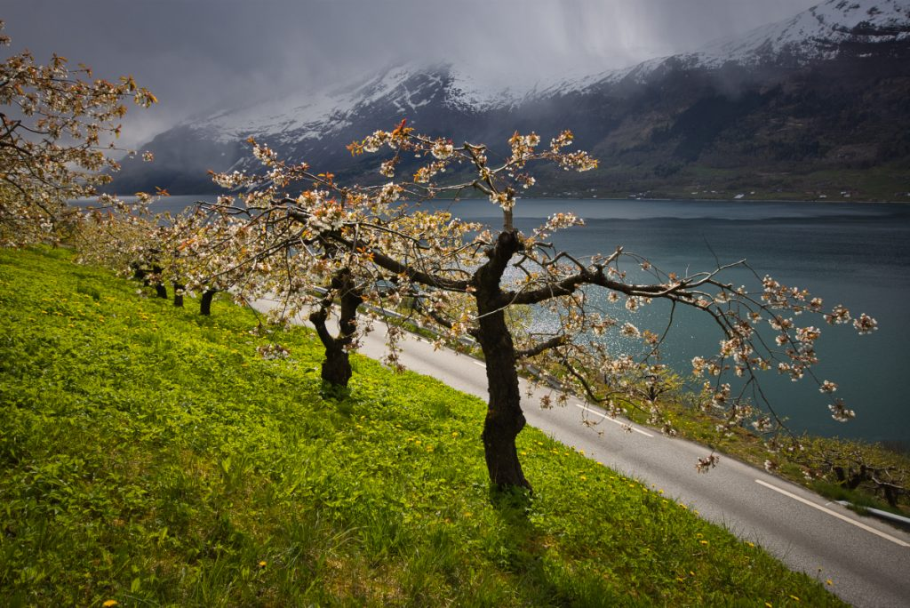Úzké silnice na březích Hardangerfjordu