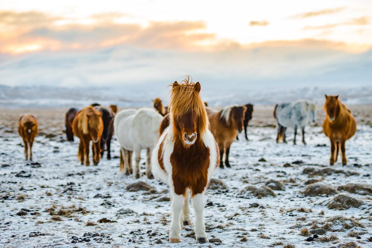 Island v zimě itinerář:  Nejkrásnější místa jižního Islandu