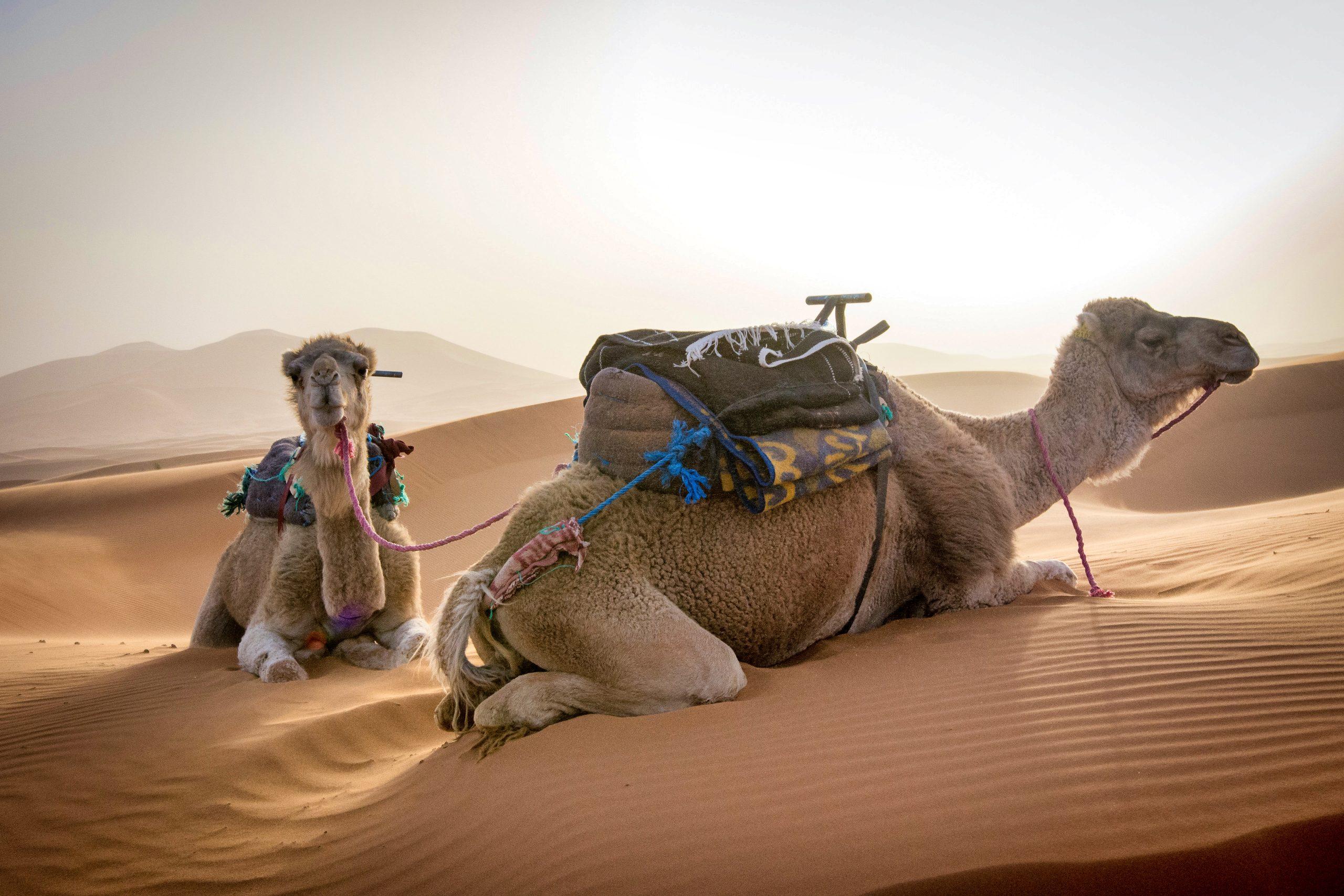 Nejlepší zážitek z Maroka? Noc v poušti Erg Chebbi