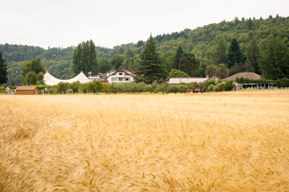 Golden fields surrounding Villa Baviera, formerly known as Colonia Dignidad.