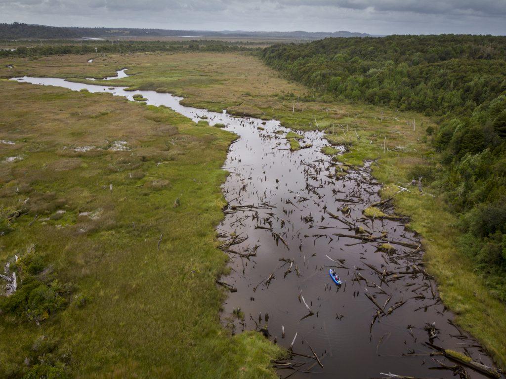 Zaplavený les v Chepu na ostrově Chiloe