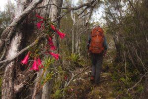 Karanténa v Argentině: Vzpomínky na národní park Tantauco