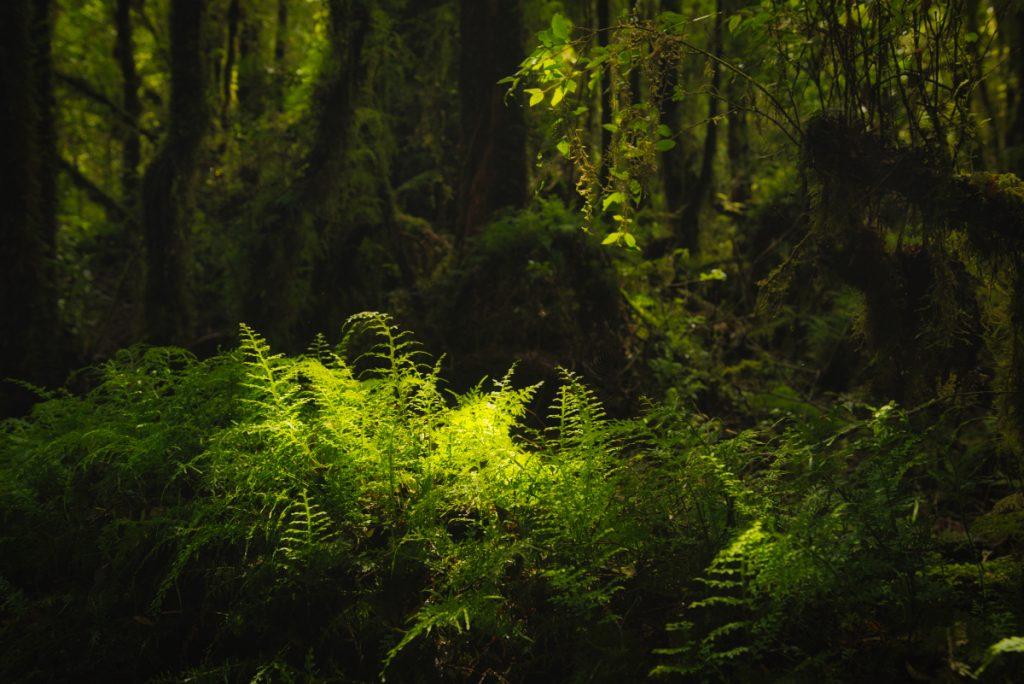 Trekking v národním parku Tantauco, ostrov Chiloé, Chile