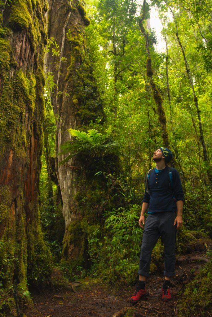 národní park Pumalín, Patagonie