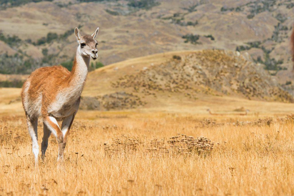 Národní park Patagonia, Chile