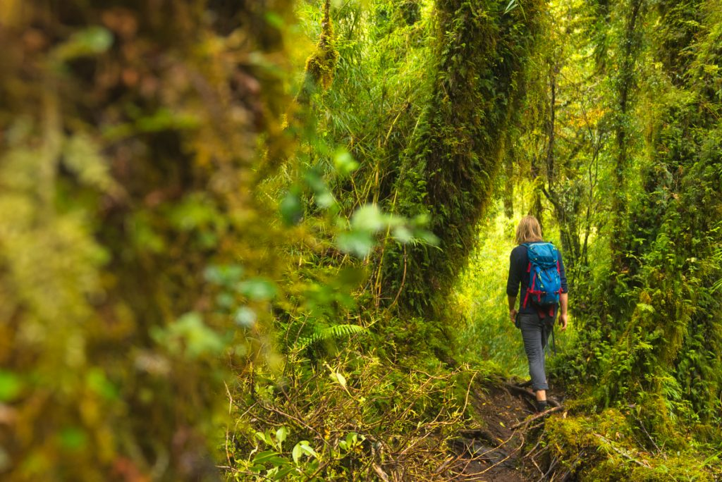 Hiking in Pumalin national park