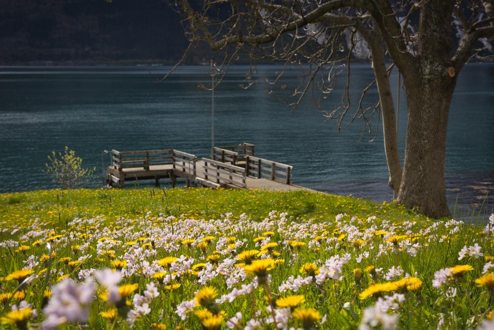 Spring in Norway, Ullensvang, Hardanger
