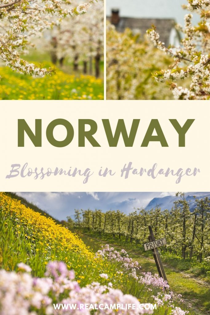 Spring in Norway: Blossoming in Hardanger PINTEREST 1