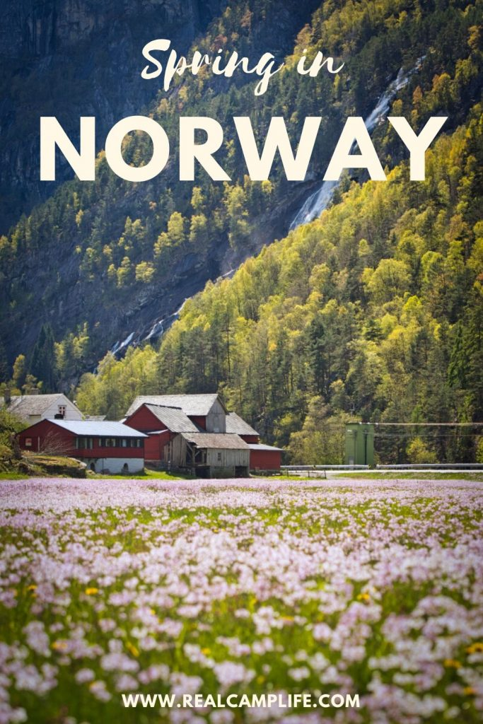 Spring in Norway blossoming