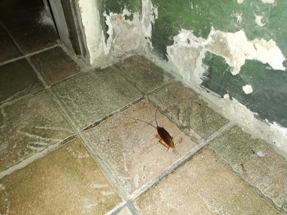Švábi na našem hostelu v Buenos Aires. Velikost zhruba mého palce.