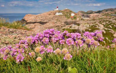 Krásy jižního pobřeží Norska aneb co nevynechat cestou na Preikestolen