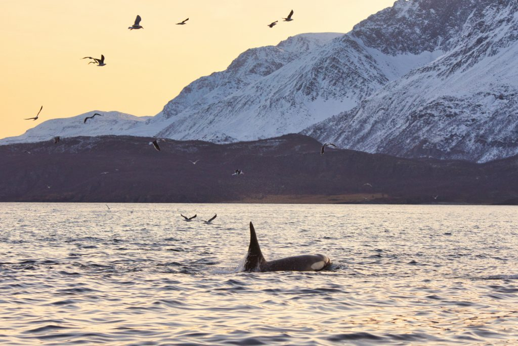 velryby safari Norsko