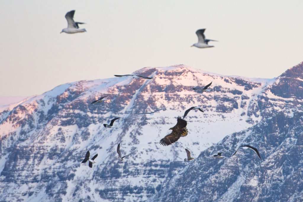 morsti orli Norsko