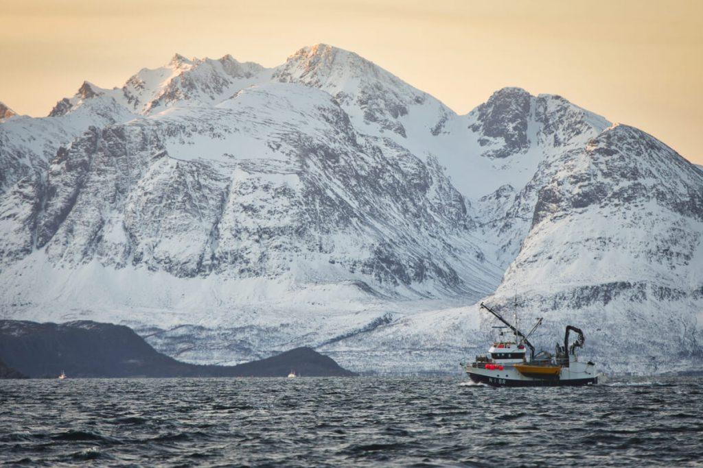 rybářské lodě lovící sledě u ostrova Skjervoy na severu Norska